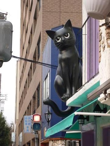 Chat noir2
