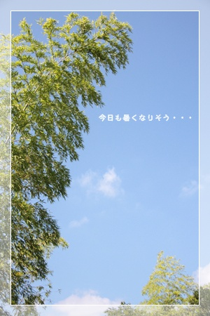 07_20110729120048.jpg