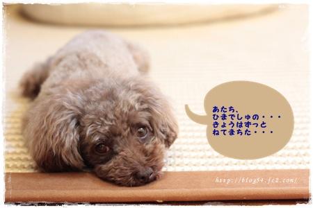 5_20110706132614.jpg