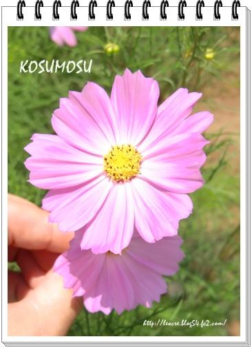 87_20110811100932.jpg