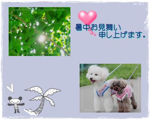 cats_20110805135054.jpg