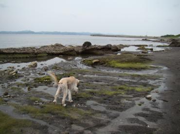 岩場を探検