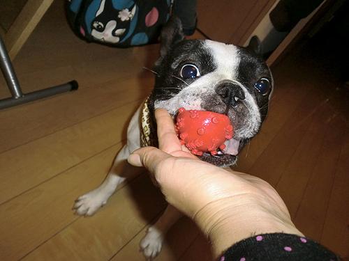 大好きなボールで