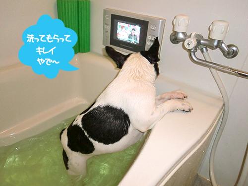 しょうがないから洗いました・・・