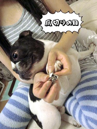 爪切りの日なのだぁ~