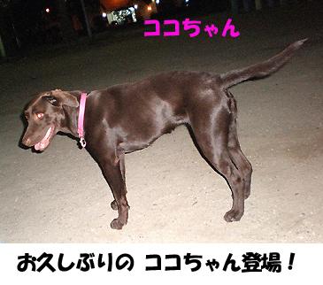 ココちゃん参上~♪