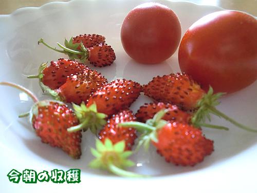 収穫だ~い!