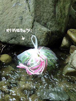 川で冷やしますヨ~