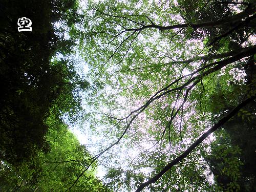 木陰で涼しい~♪