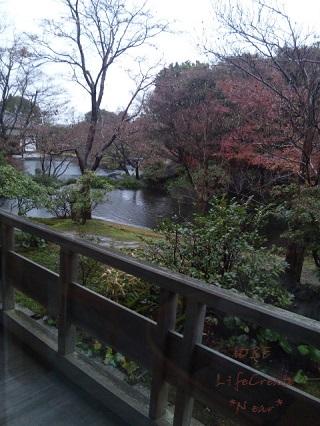 雨の日本庭園