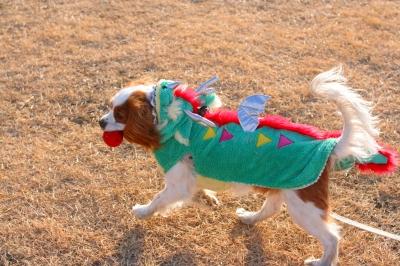 エヴァン君、縁起の良いドラゴンのお洋服!