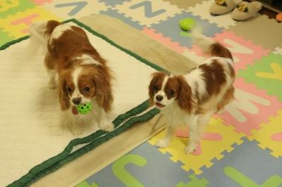 マリー>このボールは私の物。 パティ>早く投げて!