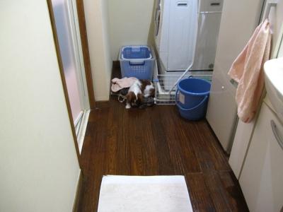 ん?洗濯物の所に注目!