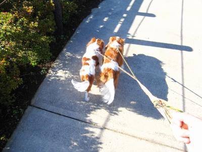 マリパティはお外で散歩。