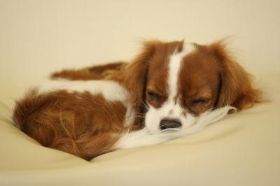 帰宅して風呂入って、疲れ果てたパティ。