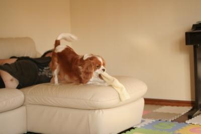 コロスケがソファを占領してます。