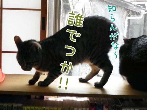 0407_3.jpg