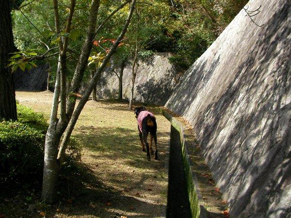 201410231136お山の公園⑤