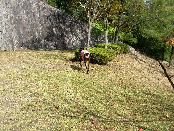 201410231136お山の公園②