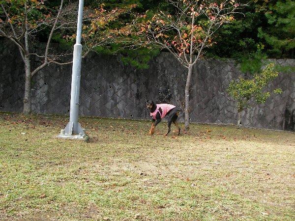 201410231136お山の公園①