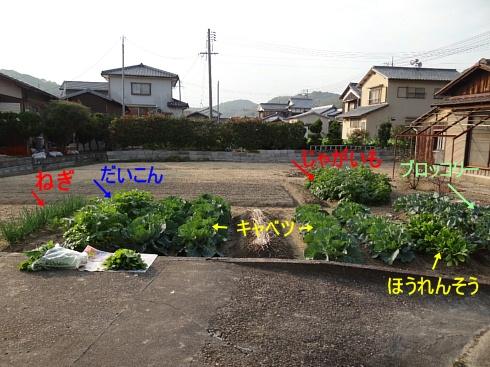 実家の家庭菜園