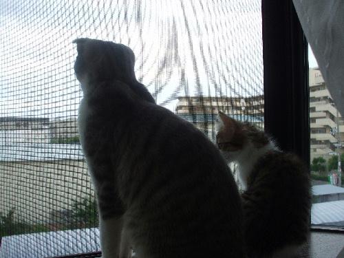 外を眺める2