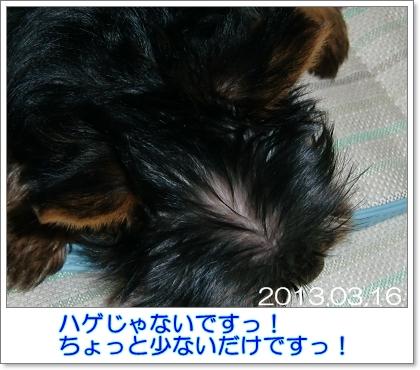 liri24.jpg