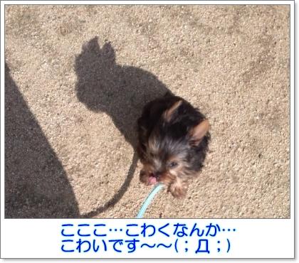 liri46.jpg