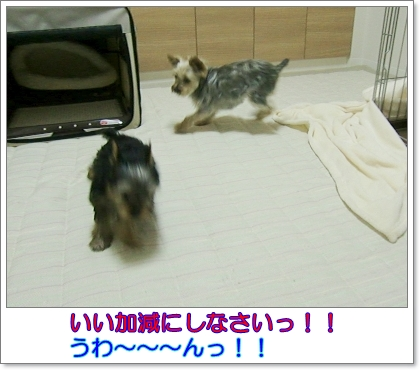 liri56-3.jpg