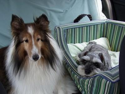 後部座席の2人