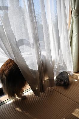 カーテンの向こう