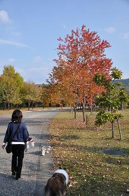 素敵なお散歩コース2
