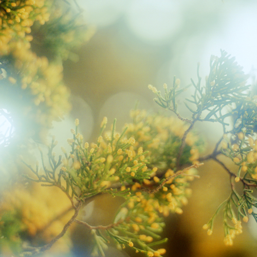 re-黄色の花1