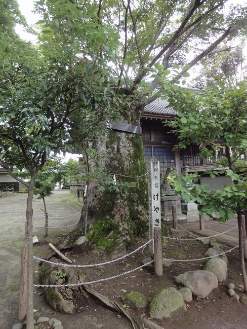 220717 賀来神社7