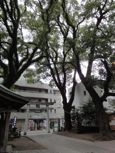 220717長浜神社5