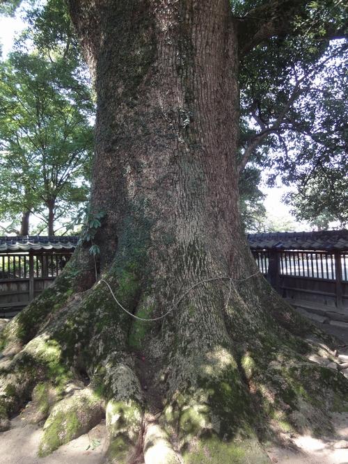 220724 熊野速玉神社5