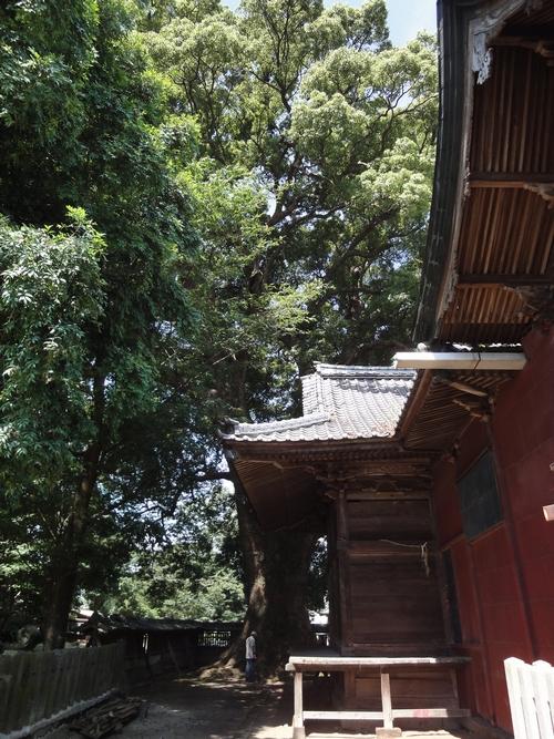 220724 熊野速玉神社8