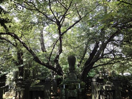 220724 天福寺4