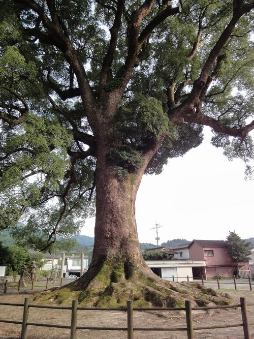220724 津江神社4