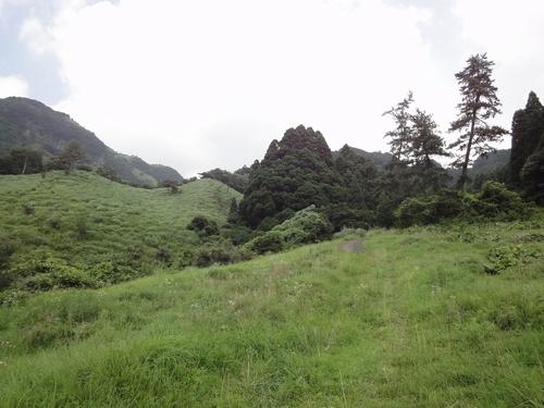 220730 高森殿の杉3