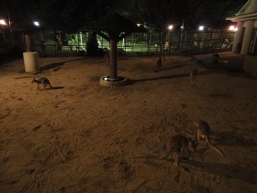 220821 夜間動物園5
