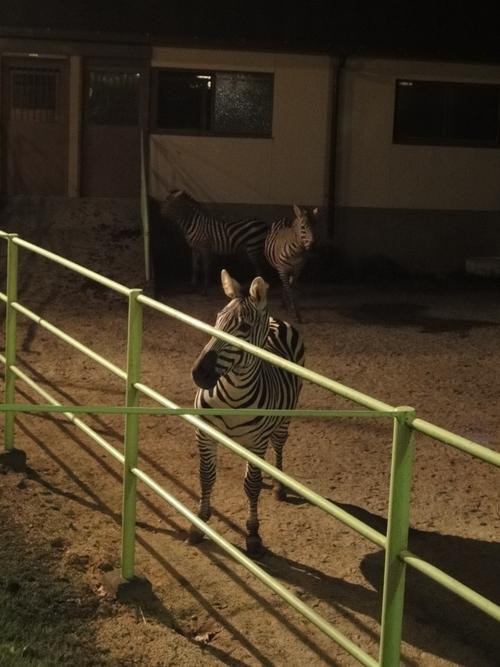 220821 夜間動物園4