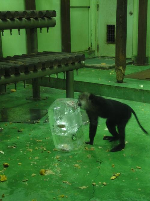 220821 夜間動物園3