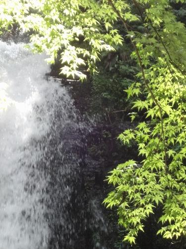 220818 白糸の滝10