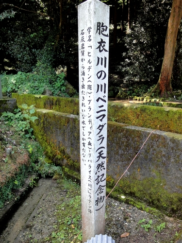 220821 いや川水源5