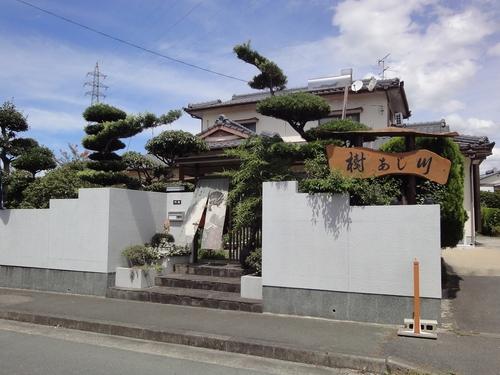 220828 樹あじ川1