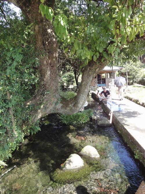 220911 池の川水源5
