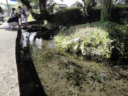 220911 池の川水源4