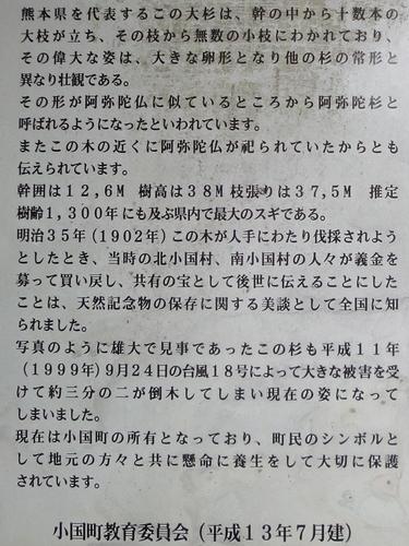 220920 阿弥陀杉5