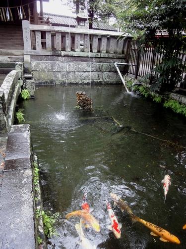 221009 八坂神社7